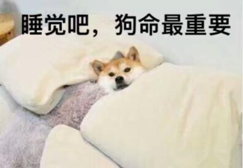 月入一狗是什么梗?月入一狗多少钱?
