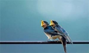 小鸟为什么站在电线上不会触电?