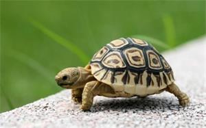 为什么乌龟的寿命那么长?